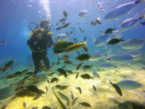 Jadran – úžasné místo pro potápění